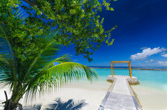 Peaceful view: palm at white sand beach on tropical paradise Maldives island Royalty Free Stock Photography