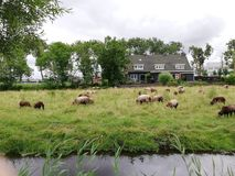 Zannse schans. Peaceful view of zannse schans in Holland royalty free stock photography