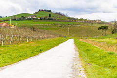 Peaceful Vineyards on rolling hills Royalty Free Stock Photos