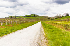 Peaceful Vineyards on rolling hills Royalty Free Stock Photo