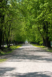Peaceful walk. Peace of mind and a pleasant walk through the park Stock Photo