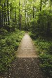 Peaceful walk through the woods Royalty Free Stock Photo