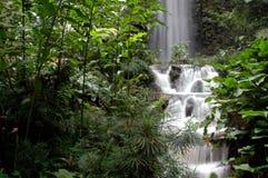 Peaceful Waterfall. Beautiful Tropical Waterfall Royalty Free Stock Image