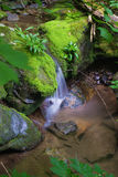 Peaceful Waterfall in the Forest. A vertical view of a peaceful waterfall located in the forest of the Blue Ridge Mountains of Virginia Royalty Free Stock Image