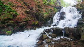 Peaceful Waterfall. Water falls over rocks through the dense fern undergrowth of a Carpathian forest stock video footage