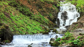 Peaceful Waterfall. Water falls over rocks through the dense fern undergrowth of a Carpathian forest stock footage