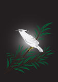 Peaceful White Bird. This Artwork describe about peacefull white color bird that stand on branch of tree Royalty Free Stock Photography