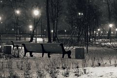 Peaceful Winter Night Park. Black and White. The winter night park. Black and white Royalty Free Stock Images