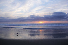 Peaceful Winter Pacific Sunset. A seagull enjoys the cool, winter Pacific sunset Royalty Free Stock Image