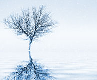 Peaceful winter scenery Stock Photo