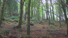 Peaceful wooded area stock video