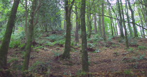 Peaceful wooded area stock footage