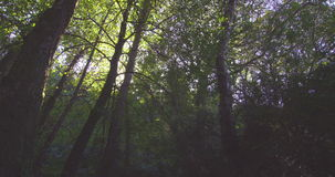 Peaceful wooded area Stock Image