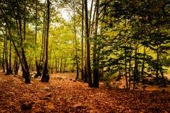 Peaceful Woodland Stock Photo