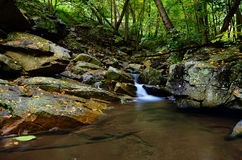 Peaceful Woodland Stream Royalty Free Stock Images