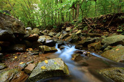 Peaceful Woodland Stream Royalty Free Stock Photo