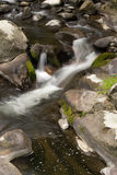 Peaceful Woodland Stream Stock Photo