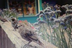 Peacefull fågel Arkivfoton