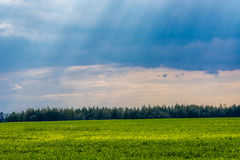 Peacefull field Stock Photography