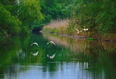 Peacefull lake scene with birds in flight Stock Photos