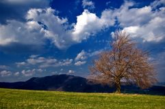 Peacefull Landscape Stock Photography