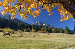 Autumn landscape with beautiful peaceful place. For grazing (Zarnesti - Brasov - Romania&#x29 Stock Photography