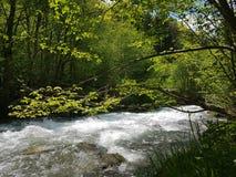 Peacefull-Riverbank stockfotografie