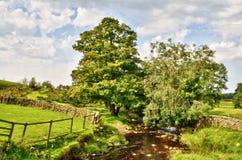 Peacefully flödande ström med överhäng trees Royaltyfria Bilder