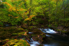Peacefully flowing stream and autumn foliage Stock Photo
