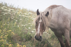 Peacefully Grazing Stock Images