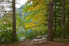 Peacefulness among autumn foliage. Along the lake with a bench to sit on Stock Image