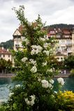 Peacefulness. Beautiful flowers on the embarkment of the river in city Thun, Switzerland Stock Images