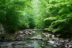 Peacful Creek. A slow moving peaceful creek Royalty Free Stock Image