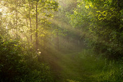 Peacful morning trail. Wooded trail with morning sun rays shining from left to right Stock Photography
