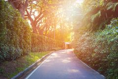 Peacful road in a park at sunset. Dramatic sunlight Stock Photo