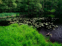peacful trän för lake Arkivfoton
