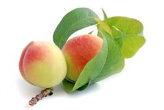 Free Peach Royalty Free Stock Images - 10675009