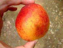 The peach Stock Photos