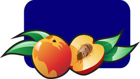 Peach. Vector color illustration of a peach Stock Images