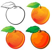 Peach. Fruit set, each in separated layer. Vector illustration, in 4 variations Stock Photo