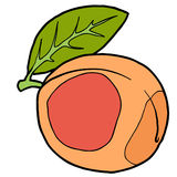 Peach. One beige pictured peach with black outline Stock Photography