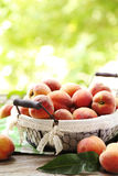 peach Fotografia Royalty Free