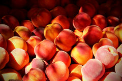 Free Peach And Sunshine Stock Images - 86053594