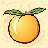 Peach, apricot Stock Photo