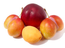 Peach with apricot and plums. Peach with apricot and unusual plums Stock Image