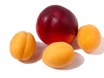 Peach with apricot. Peach with three orange apricots Stock Photography