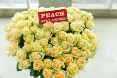 Peach Avalanche yellow rose bouquet Stock Images