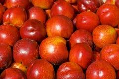 Peach background Stock Image