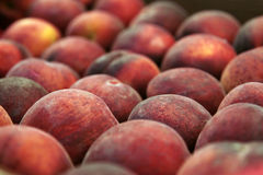 Peach Background Royalty Free Stock Images