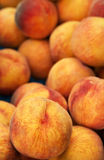 Peach Background Royalty Free Stock Photos
